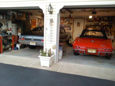 sharing space with the yenko